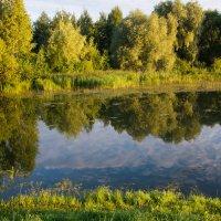 Городской парк. :: Владимир Безбородов