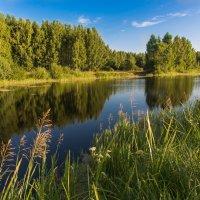 Лесное озеро. :: Виктор Евстратов