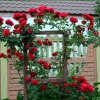 Милые сердцу розы :: Татьяна Пальчикова