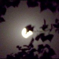 Луна в затмении, прикрытая листочком ! :: Надежда