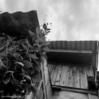 Деревенские мотивы - стремление в облака :: Silver Light