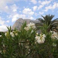 цветы и горы :: Анна Воробьева