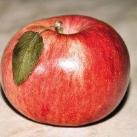 Молодильное яблочко :: Наталья Жукова