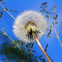 Только небо, только ветер. Только космос впереди... :: Dmitry Saltykov
