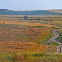 Крымские поля :: Роберт Гресь
