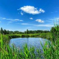 Лесное озерцо :: Милешкин Владимир Алексеевич