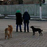 Девчонки и собачёнки :: Анатолий Шулков
