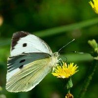 Сладкий нектар :: Анатолий Иргл