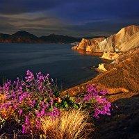 утренний свет озаряет мысы и цветы кермека на склонах :: viton