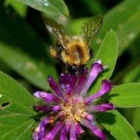 Bumblebee :: ID@ Cyber.net