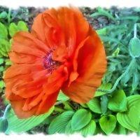 Маков цвет. :: Валентина ツ ღ✿ღ