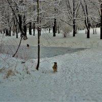 Убежали в зиму... :: Sergey Gordoff