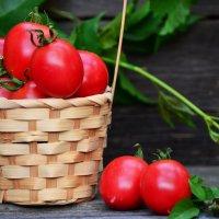 Я томат - солнцу рад! :: Татьяна Евдокимова