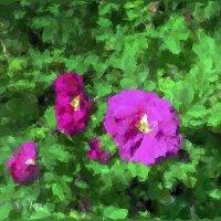 На что похож шиповник? 3.  Придворные дамы :: Фотогруппа Весна.