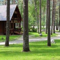 Дом на Алтае :: Алина Меркурьева