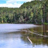 Лесное озеро :: Евгений Гецев