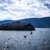 Птичий остров :: Olesia Dildina