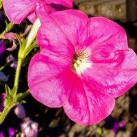 Летний цветок 2 :: Дмитрий Шумаков