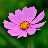 Цветок :: Роман Кудрин