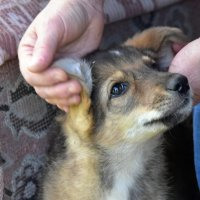 ласковый щен :: Валерия Шамсутдинова