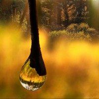 Так плачут деревья :: Елена Строганова