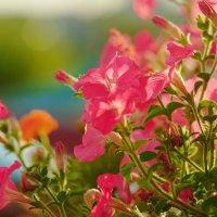 цветы :: Георгий Никонов
