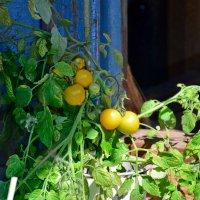Про сельское хозяйство или мой огород... :: Михаил Болдырев