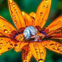 улитка на цветке :: олег