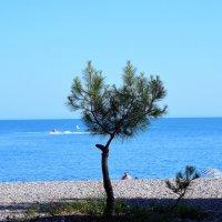Вид на море :: Роман Небоян