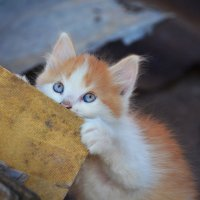 Раз, два, три, четыре, пять! Кто не спрятался - я не виноват! :: Татьяна Евдокимова