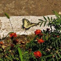 а бабочка крылышками... :: Александр Корчемный