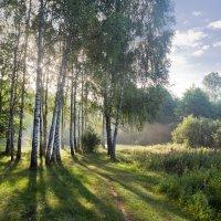 Рассвет на опушке берёзовой рощи :: Александр Крупский