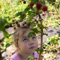 Лиса и... малина :: Тася Тыжфотографиня