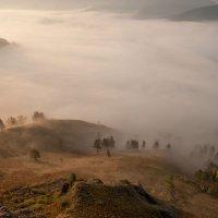 Туман на рассвете :: Сергей Герасимов