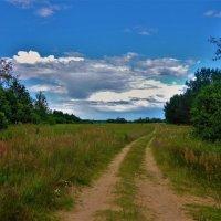 Дорога вдоль Мологи реки... :: Sergey Gordoff