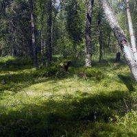 Болотина *** The swamp :: Александр Борисов