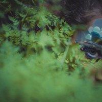 Тайны леса :: Алёна Николаева