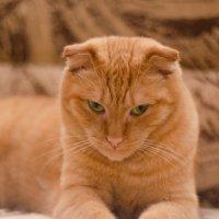 Солнечный кот) :: Екатерина Рябова