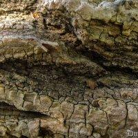 Текстура дерева :: Дмитрий Шумаков