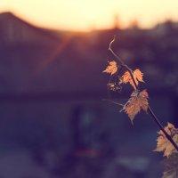 провожая солнце :: Тася Тыжфотографиня