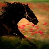 По цветочному лугу.. :: Виктор Перякин
