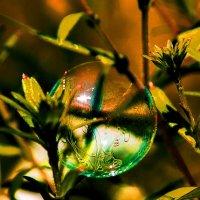 мыльные пузыри... :: Игорь