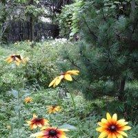 Цветы лета :: Дмитрий Никитин