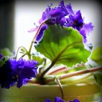 ой,во все стороны цветы :: Олег Лукьянов