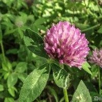 Летний цветок 3 :: Дмитрий Шумаков