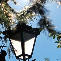 Луч солнышко включил фонарь... :: Анна Приходько