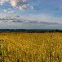 Невеселое поле :: Валерий Симонов