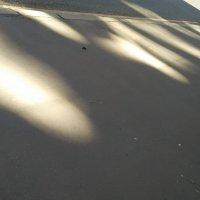 Солнечные зайцы :: Tanja Gerster