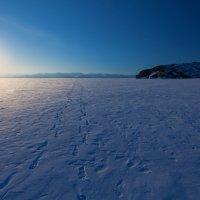 Следы на льду :: Анатолий Иргл