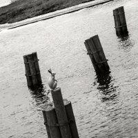 Зайка серенький... сей заяц караулит и оберегает град Петров от наводнений... :: Владимир Питерский